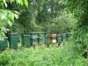 gmjd2011-120611-112-klein