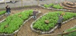 tuin vanaf boven